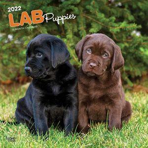Calendario Labrador Retriever. Lab Puppies 2022